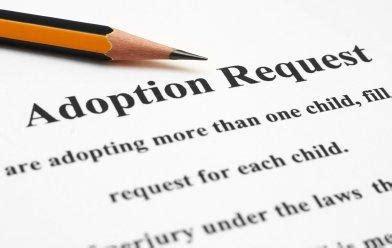 Adopting stray animals essay